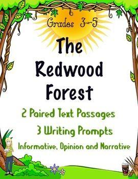 Writing essay activity body paragraphs