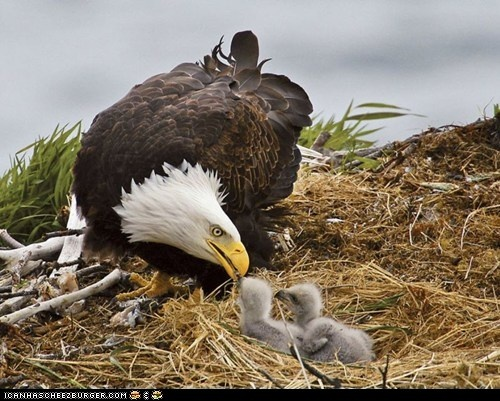 Come see the Bald Eagles that use the Fox River as a hunting ground then some stay for nesting.