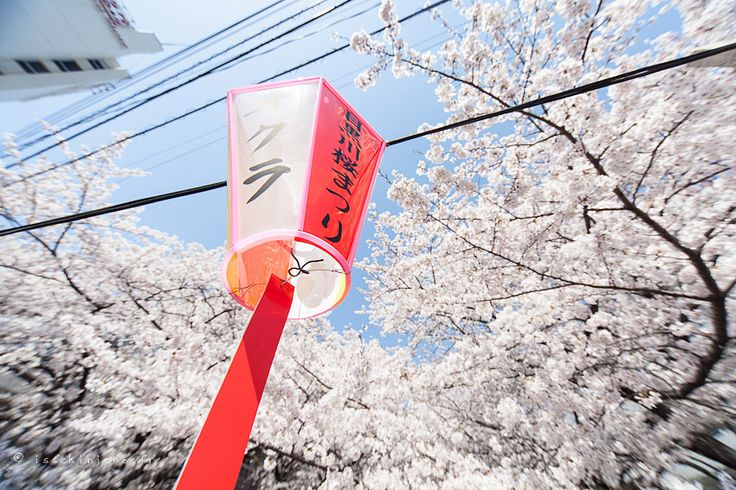 http://www.issekinicho.fr/blog-japon/wp-content/gallery/hanami-meguro2012/hanami_meguro2012-03.jpg