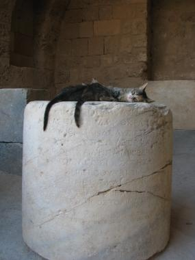 User Photo: Rhodes, ancient ruins, cat, cats, greek