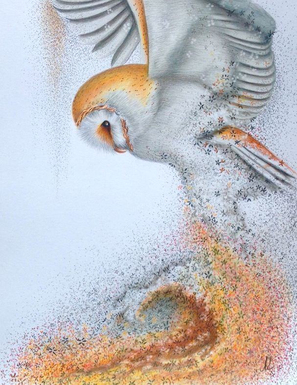 Pastel and Polychromos drawings - drawings / federmomente.de
