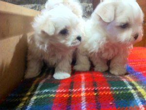 small: Dogs For Sale in Ireland - DoneDeal.ie