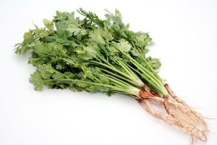 how to take care of coriander plant