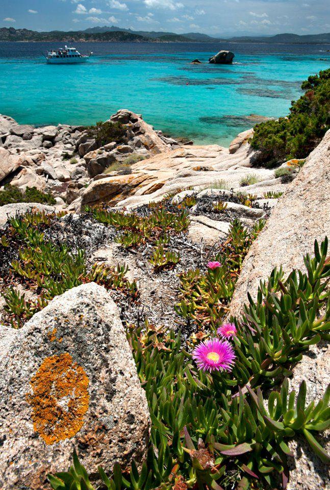 The beautiful island of Sardinia #imparisardinia #impari #sardinia #flower #spring #tree #nature #italy #landscape