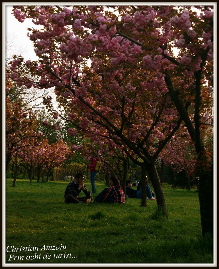 The Japanese garden in park Herestrau, Bucharest...