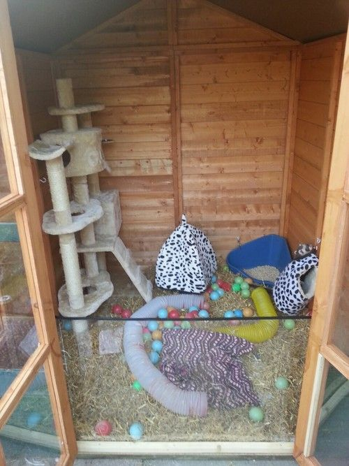 Shed for a ferret...