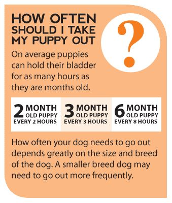 BEFORE getting a puppy, know that at first, they need to go out about every 30 mins. to an hour.  They have small bladders and not much bladder control until they get older.  Puppies require a lot of care, PATIENCE, and understanding.  Research housebreaking and crate training.