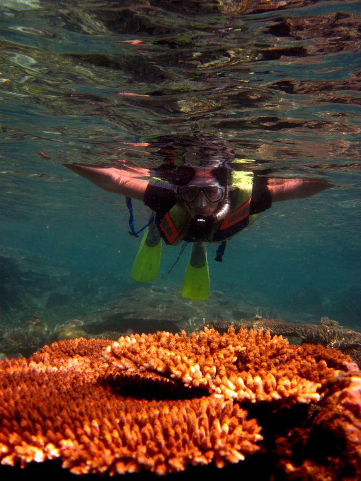 explore the dazzling coral gardens..