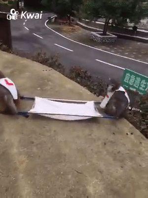 A equipe de paramédicos das olimpíadas está preparada
