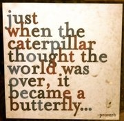 :-): Proverbs, Butterflies, Caterpillar Thoughts, Beautiful, Favorite Quotes, Living, Inspiration Quotes, Over It, The World