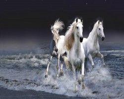 Witte-paarden
