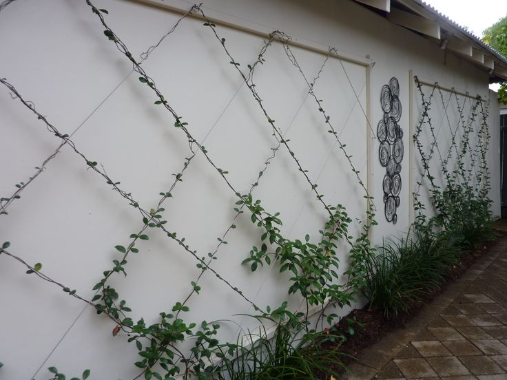 Best 20 brick wall gardens ideas on pinterest for Wall trellis ideas