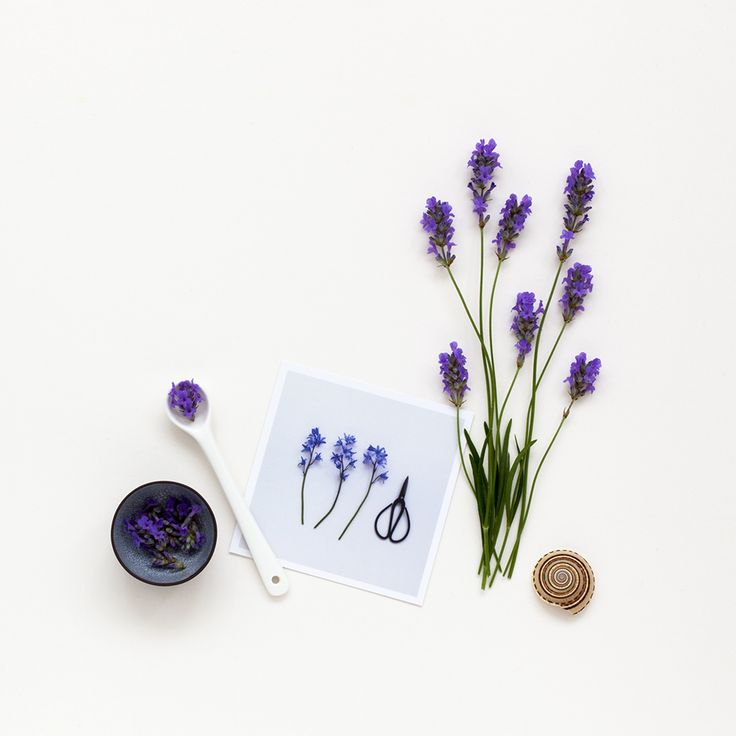 Bluebells and lavender / Candy Pop: http://www.candypop.uk.com/
