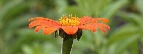 Цветок, Оранжевый, Оранжевые Цветы