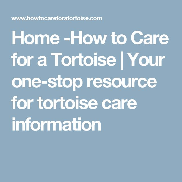 Home -How to Care for a Tortoise | Your one-stop resource for tortoise care information