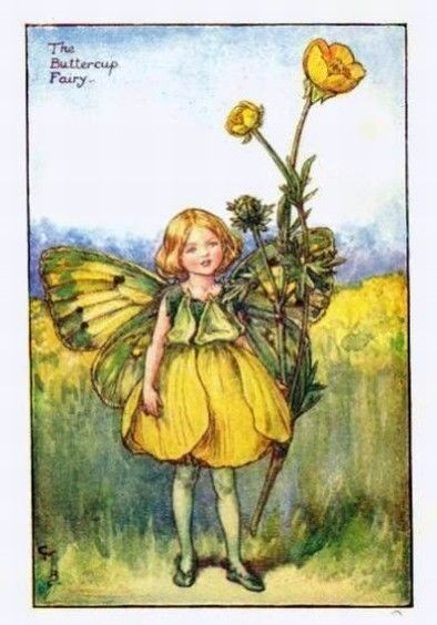 Buttercup Flower Fairy Vintage Print by Cicely Mary Barker.  first published in London by Blackie, 1925 in Flower Fairies of the Summer.