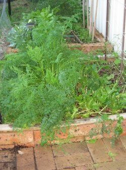 A raised bed vegetable garden, flower garden or herb garden is a garden which is…
