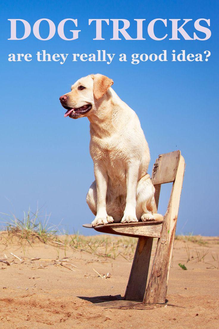 142 best Dog Training images on Pinterest | Training tips, Your dog ... | Dog Training Tips And Tricks