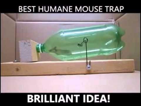 les 25 meilleures id es de la cat gorie pi ges souris sur pinterest pi ges rats contr le. Black Bedroom Furniture Sets. Home Design Ideas
