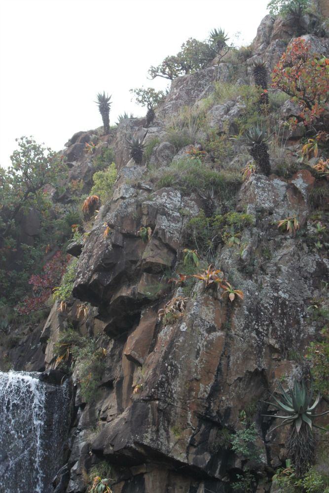 Jacobs Falls Lotheni