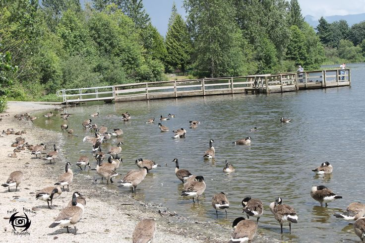 Mill Lake Park Located at 2310 Emerson Street, Abbotsford, British Columbia