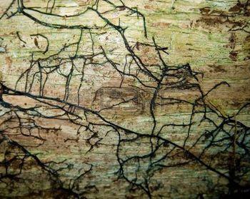 burl wood: Holz Textur Lizenzfreie Bilder