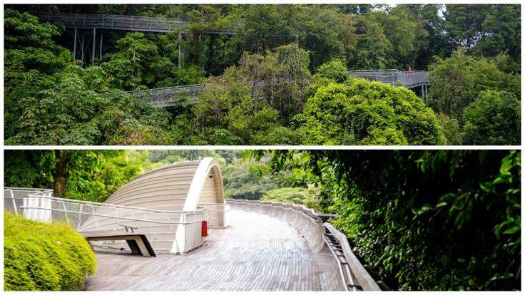 Singapour quartier southern ridges blog voyage lovelivetravel