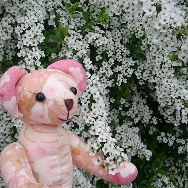 白いお花をみつけましたー  #friday_flower_plushfes に参加します🌼#和柄 #ハンドメイド #手縫い #flower #flowerslovers #floweroftheday #お花 #お花のある生活 #和裁技能士さんはお花が好き #テディベア #フォローミー #こでまり