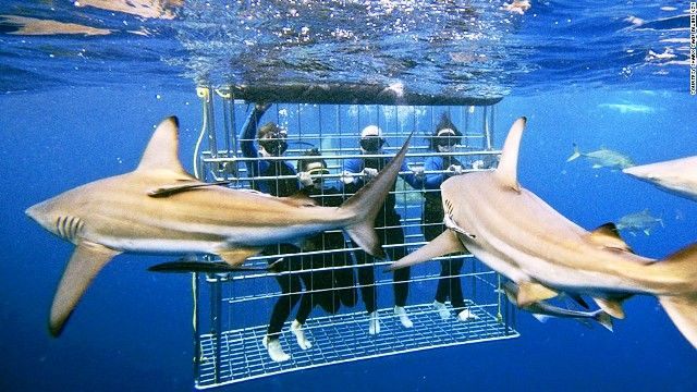 Best Place to Dive with Sharks - Novel Travel list