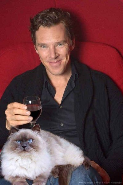 Benedict Cumberbatch + cat + wine!!!Pinned by: www.spinstersguide.com