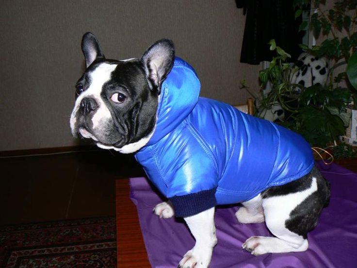 Костюмы для собак крупной породы