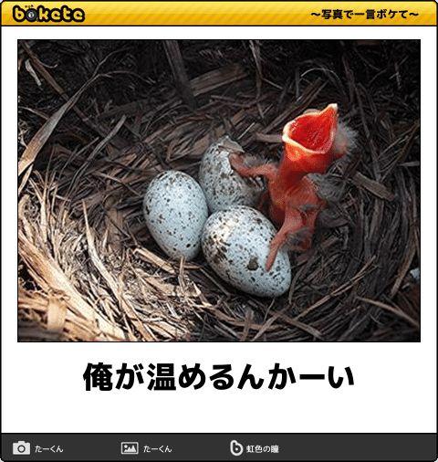 【ボケ】俺が温めるんかーい - ボケて(bokete)