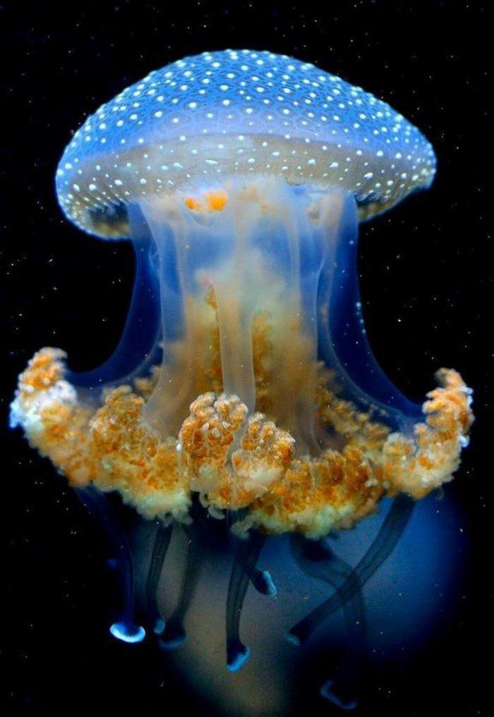 les fonds marins, une méduse                                                                                                                                                                                 Plus