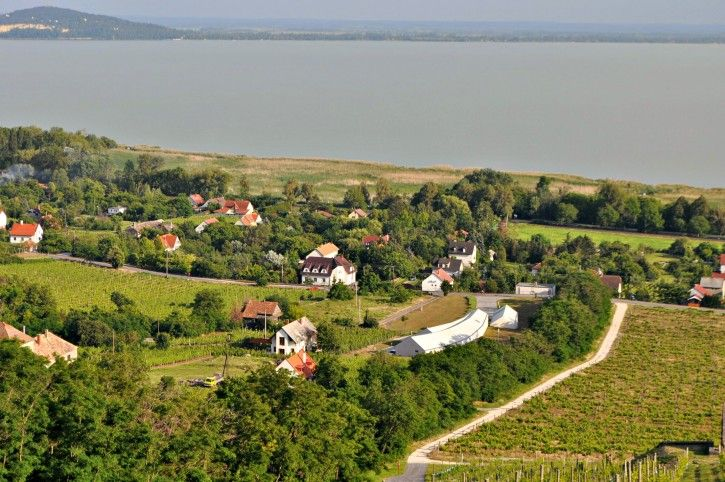 A glimpse of Badacsony from the top of the hill: #vineyards, #wineries, #Balaton. #gastronomy #wine #grapes #food #cultural