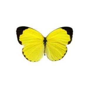 butterfly tattoos yellow | Butterfly Tattoo Designs Pictures Ideas ...