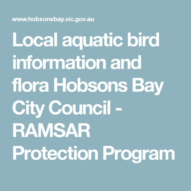Local aquatic bird information and flora         Hobsons Bay City Council -         RAMSAR Protection Program