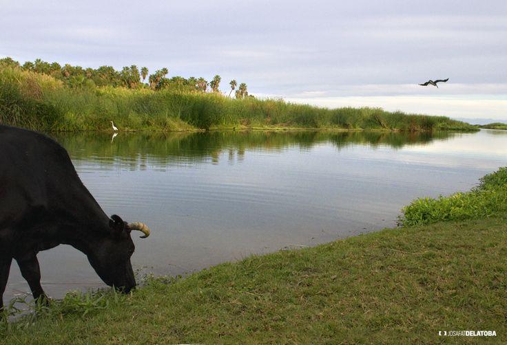 Life San Jose estuary #josafatdelatoba #cabophotographer #loscabos #bajacaliforniasur #mexico #rural #cow #estuary