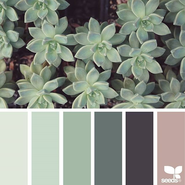 today's inspiration image for { succulent hues } is by @swgardens ... thanks so much for sharing your inspiring photo in #SeedsColor !