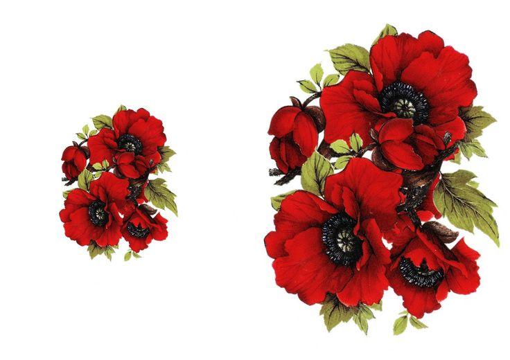 poppy-border-wide.jpg (1600×1131)