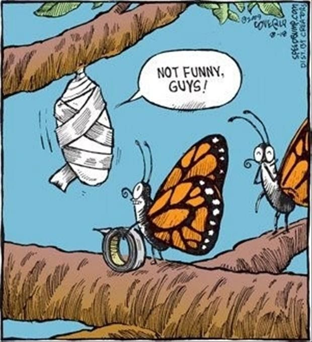 Funny Butterflies Gaffer Tape Cartoon Joke Picture | Funny Joke Pictures