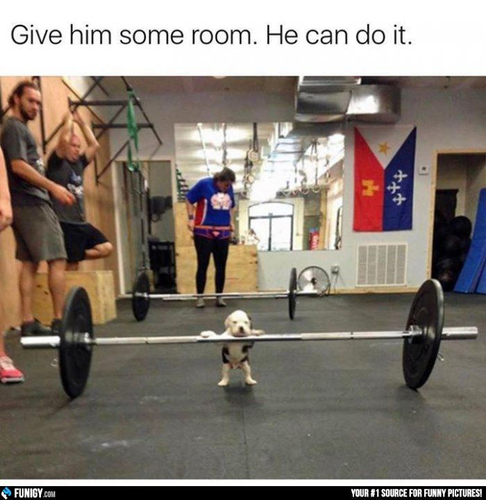 Give him some room. He can do it! (Funny Animal Pictures) - #cute #gym #puppy