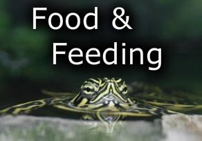 What do pet turtles eat? Check out this food and feeding guide to what they eat. Remember these are pet turtles that live in our homes.