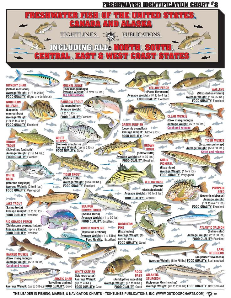Craftsman Style Home Decorating Ideas: How To Identify Freshwater Species, Shad, Perch, Walleye