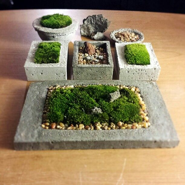 Moss growing in small, hand-poured concrete planters on my desk.