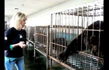 China is het ergst. In China zijn de kooien zó klein dat de beren zich niet kunnen bewegen, draaien of rechtop staan. Sommige beren zitten al als welp in een kooi en weten niet wat vrijheid is. Beren zitten wel tot 30 jaar gevangen. De meeste beren zijn uitgehongerd en uitgedroogd. - See more at: http://www.dierennood.nl/66e-Hulpactie-Moonbears.html#sthash.BM7eVbox.dpuf