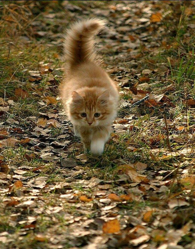Lovely Autumn Kitten