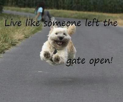 Live life like someone left the gate open.