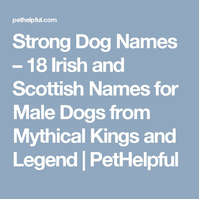 The 25+ Best Dog Names Male Ideas On Pinterest