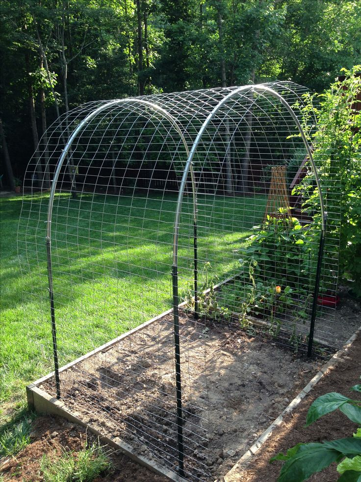 Arched trellis for cantaloupe, watermelon and sugar pumpkins. Took only 30 mins to make.