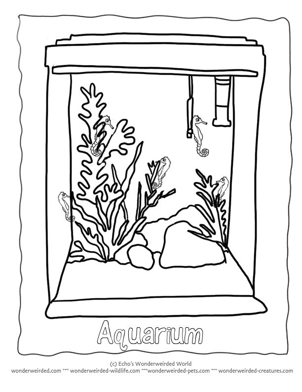 122 best :3 Animal Coloring Pages images on Pinterest   Goldfish ...